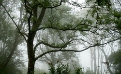 Magical Trees in the gloom