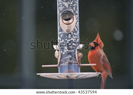 Male Cardinal on a bird feeder with snow falling