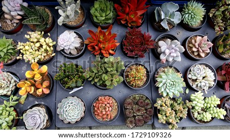 Many types of succulents image