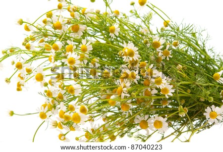 Medical daisy on a white background