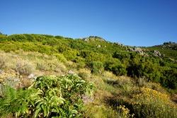 Mediterranean flora in Corsica mountain