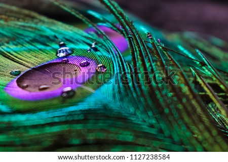 Photo of   micro peacock feather HD image,best texture background, colourful indian peacock feather