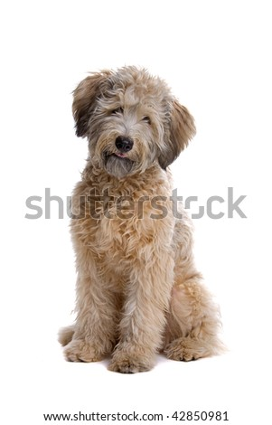 mixed breed dog isolated on a white background #42850981