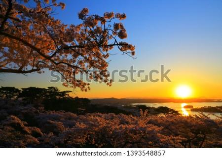 Miyagi Prefecture Matsushima in spring #1393548857