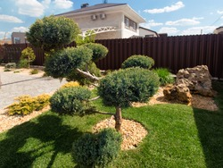 Modern conifer Garden design with large stones. Cloud pruned topiary tree. Rock garden design.