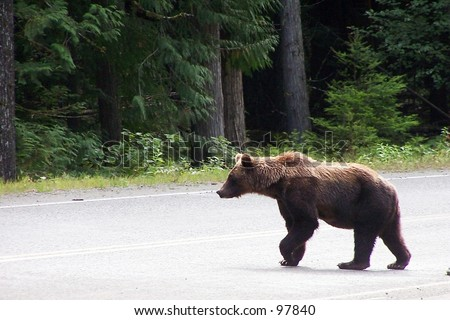 Momma Grizzly Bear
