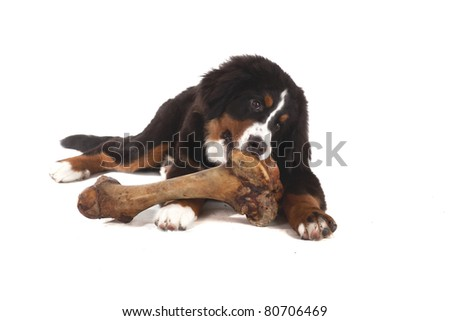 Huge Dog Bone