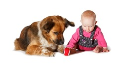 9 months old Baby and dog playing on white background