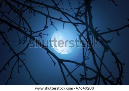 moonlight - stock photo