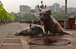 'Morning in Vladivostok: Tiger cubs'