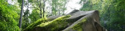 Moss on the rock. Stolby national park in Krasnoyarsk. Forest and a large stone with moss. Siberian nature landscape.