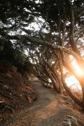 Mount Maunganui Summit Track sunset walk Pohutukawa