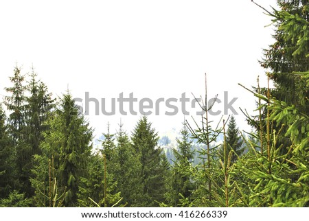 mountain and forest views of the Carpathian mountains in Ukraine