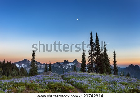 Mt. Rainier in Twilight