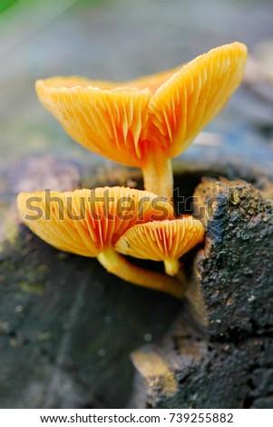 mushroom #739255882