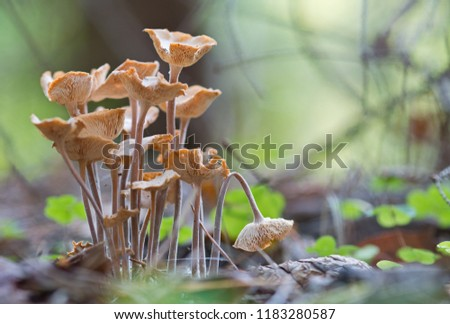 Mushroom bouquet is a picturesque macro-picture from the life of a wild forest.