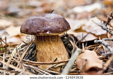mushrooms grow in the forest