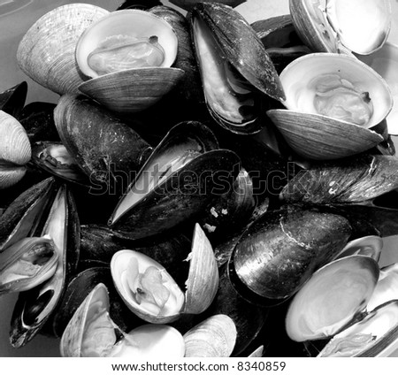mussels and little neck clams in black and white