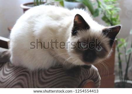 My furry friend #1254554413
