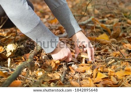 2020, N/z Kobieta zbiera grzyby fot. Mateusz Kuxniak/RPORTER Zdjęcia stock ©