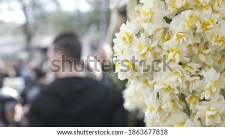 narcissus  nergis White Flowers Karaburun people Life  Photo stock ©