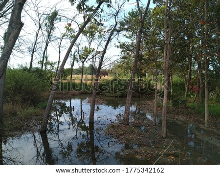 natural pond with teak tree and blue sky reflections on the water