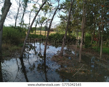 natural pool with teak tree and blue sky reflections on the water