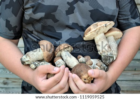 Nature,environment,forest and people concept : man is holding hands summer mushrooms collected in the forest.