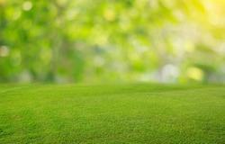 ??Nature spring grass background texture and Summer season backtground.