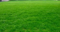 Neatly lush football pitch close-up
