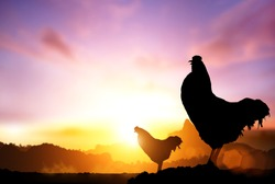 2017 new year concept, chicken silhouette in sunrise