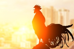 2017 new year concept,Silhouette of  Rooster chicken cockcrow on morning top view city