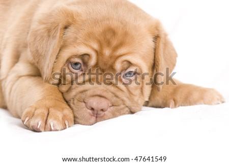 Nice Puppy Sleeping