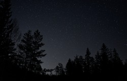 Night sky with visible stars in a remote location where you can see tree tops