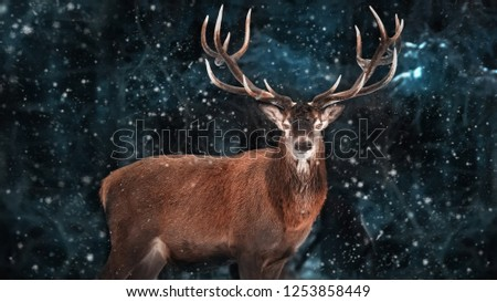 Noble deer male in a snowy forest. Natural christmas winter image. Winter wonderland.