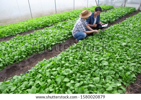 [object Object]Farmers in green vegetable plots in closed houses to protect against insects