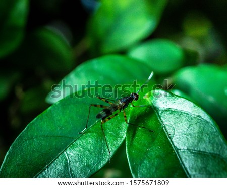 [object Object]Flies on Asian leaves are highly toxic in natural rainforests.