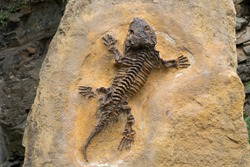 old geological fossilized lizard in stone