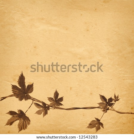 old paper background with twined hops vine \