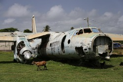 Old Soviet Propeller Airplane in a Grassy Field with Goats