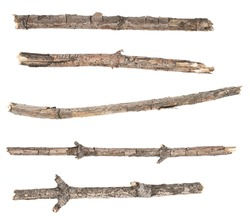 Сollage dry tree twigs branches isolated on white background. pieces of broken wood plank on white background. close-up
