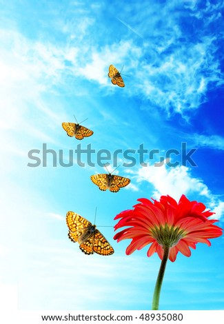Pictures Of Butterflies Flying. orange utterflies flying