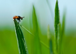 orange fly sits on green grass