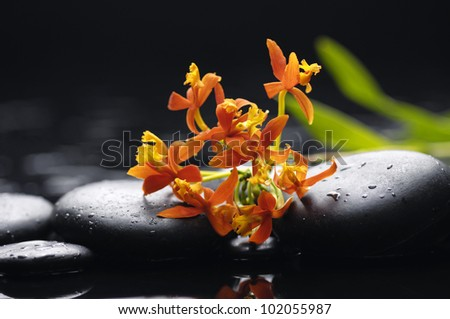 Orange Orchid and zen stones with leaf on wet background