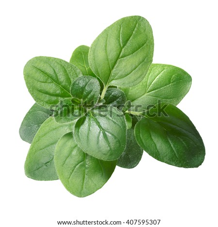 Oregano (Origanum vulgare) leaves. Clipping path, infinite depth of field #407595307