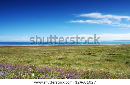 Overlook Qinghai lake, wetland, wild flowers