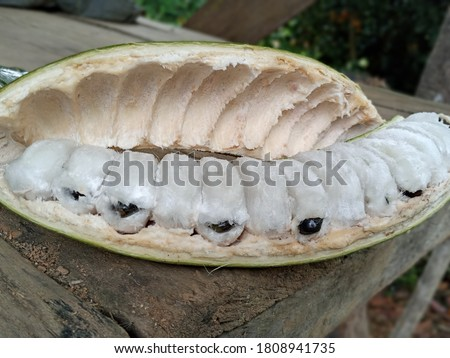 'PACAE', 'GUABA' OR 'PACAY' THAT GROW IN THE JUNGLE, IS A FRUIT WELL KNOWN BY THE INHABITANTS OF THE AREA. IT HAS THE FRUIT COLOR WHITE AND SPONGY LIKE COTTON IS A DELIGHT IN THE AREA. Stock photo ©