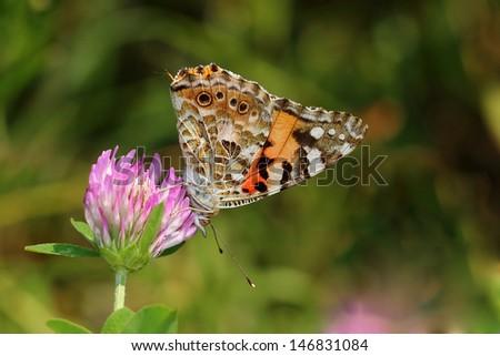 Butterflies&Moths