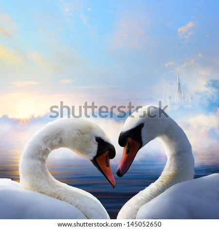 pair of swans in love floating on the water at sunrise of the day