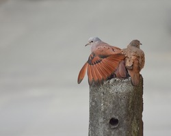 Pair of turtledoves on a lamppost in the city